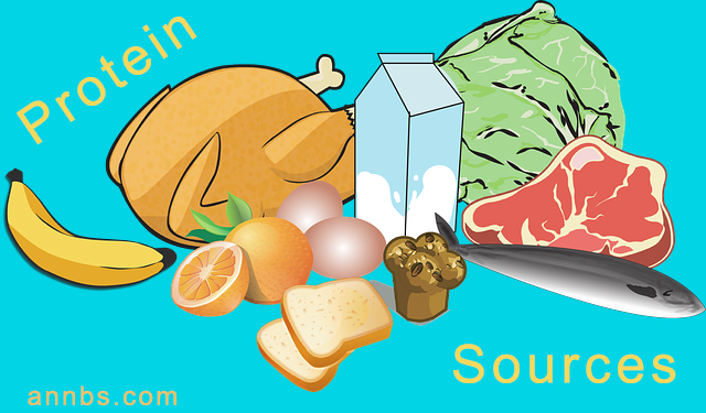 What is Protein - protein sources