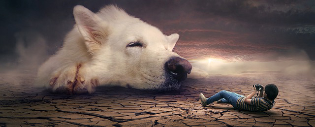 A man taking dog's picture in his dream